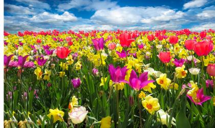 Wiosenne inspiracje